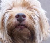 doggie-schnoz